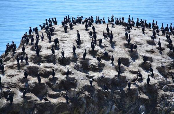 鸟岛的海西皮,东高西低,状如跳板,面积比海西山大4倍多,约4.